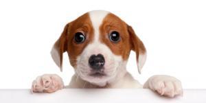 Bewegungssensor für Haustiere